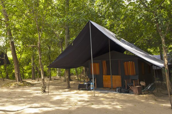 Safari tent surrounded by undergrowth