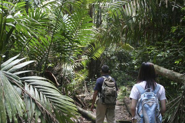 Walkers amongst exotic foliage
